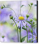 Autumn Asters Canvas Print by Jacky Parker