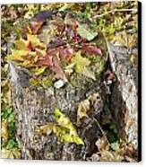 Autumn Berries And Leaves  Canvas Print by Aleksandr Volkov