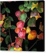 Autumn Color Canvas Print by Brenda Bryant