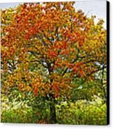 Autumn Maple Tree Canvas Print by Elena Elisseeva