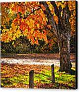 Autumn Maple Tree Near Road Canvas Print by Elena Elisseeva