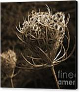 Autumn Pod Canvas Print by Jim Wright