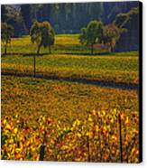 Autumn Vineyards Canvas Print by Garry Gay