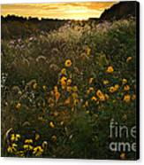 Autumn Wildflower Sunset - D007757 Canvas Print by Daniel Dempster