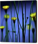 Avatar Flowers Canvas Print by Mauro Cociglio - Turin - Italy