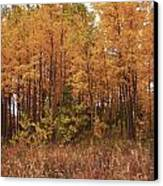 Awesome Aspens Canvas Print by Carol Cavalaris