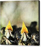 Baby Birds Canvas Print by Darren Fisher