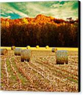 Bales Of Autumn Canvas Print by Bill Tiepelman