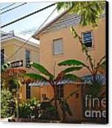 Banana Tree Lane In Key West Canvas Print by Susanne Van Hulst