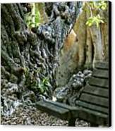 Banyan Tree And Park Bench Canvas Print by Dennis Clark