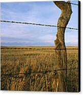 Barbed Wire Fence Along Dry Creek Road Canvas Print by Gordon Wiltsie
