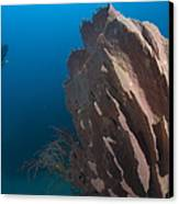 Barrel Sponge And Diver, Papua New Canvas Print by Steve Jones