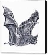 Bat Canvas Print by Lucy D