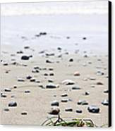 Beach Detail On Pacific Ocean Coast Of Canada Canvas Print by Elena Elisseeva