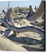 Beach Driftwood Art Prints Coastal Sand Dunes Shore Canvas Print by Baslee Troutman