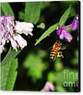 Bee In Flight Canvas Print by Kaye Menner