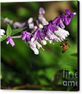 Bee On Flower Canvas Print by Kaye Menner