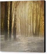 Beware Misty Woodland Path Canvas Print by Meirion Matthias