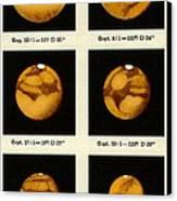 Beyer's Observations Of Mars Canvas Print by Detlev Van Ravenswaay