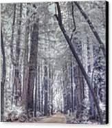 Big Sur State Park Canvas Print by Jane Linders