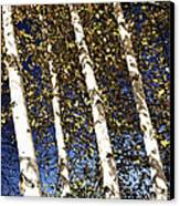 Birch Trees In Fall Canvas Print by Elena Elisseeva