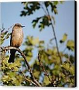 Bird On Branch Canvas Print by Chase Hall