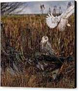 Birds Of Bc - No.14 - Snowy Owl Fly By Canvas Print by Paul W Sharpe Aka Wizard of Wonders