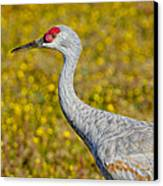 Birds Of Bc - No. 35 - Young Sand Hill Crane Canvas Print by Paul W Sharpe Aka Wizard of Wonders