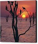Birds On Tree, Lake Kariba At Sunset Canvas Print by Axiom Photographic