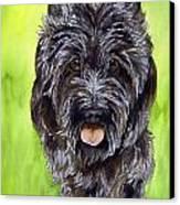 Black Scottish Terrier Canvas Print by Cherilynn Wood