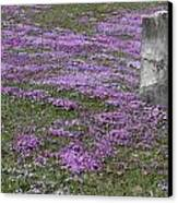 Blank Colonial Tombstone Amidst Graveyard Phlox Canvas Print by John Stephens