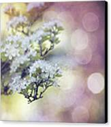 Blossom Canvas Print by Joel Olives