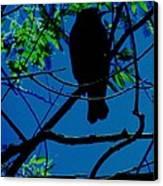 Blue-black-bird Canvas Print by Todd Sherlock