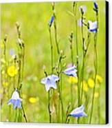 Blue Harebells Wildflowers Canvas Print by Elena Elisseeva