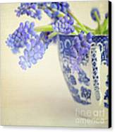 Blue Muscari Flowers In Blue And White China Cup Canvas Print by Lyn Randle