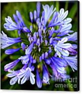 Blue On Blue Canvas Print by Karen Wiles