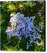 Blue Wild Flowers Canvas Print by Mindy Newman