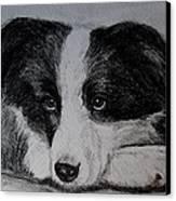 Borden Collie Pup Canvas Print by Joan Pye