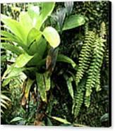 Bromeliad On Tree Trunk El Yunque National Forest Canvas Print by Thomas R Fletcher