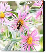 Bumble Bee On Asters Canvas Print by Lena Auxier