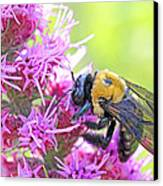 Busy As A Bee Canvas Print by Becky Lodes