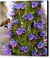 Busy Bee Canvas Print by Ruth Edward Anderson