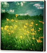 Buttercups Canvas Print by Neil Carey Photography