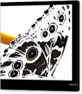 Butterfly Dream Canvas Print by Xoanxo Cespon