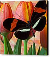 Butterfly On Orange Tulip Canvas Print by Garry Gay