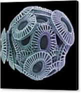 Calcareous Phytoplankton, Sem Canvas Print by Steve Gschmeissner