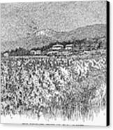 California: Vineyard, 1889 Canvas Print by Granger