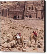 Camels In Front Of The Royal Tombs Petra Canvas Print by Martin Child