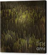Canadian Forest - The Woods Are Lovely Dark And Deep Canvas Print by Christine Till