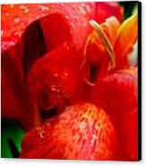Canna Lily Canvas Print by Tammy McKinley
